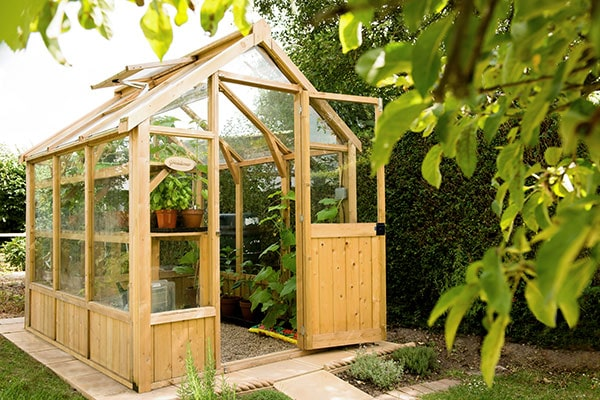 an 8x6 wooden greenhouse full of plants