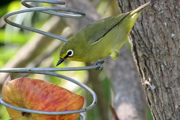 Attracting birds to your garden this summer