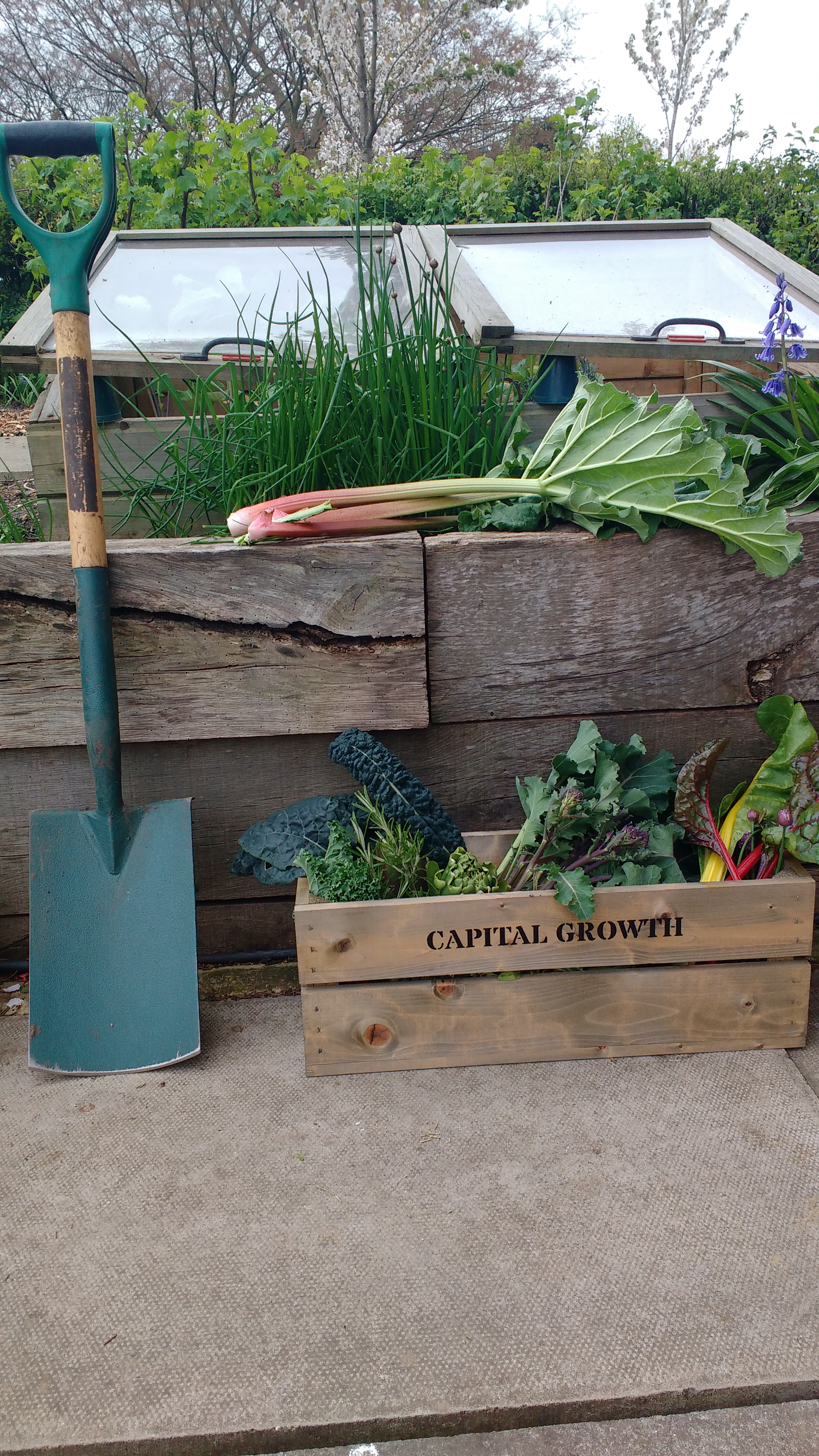 An Interview with Capital Growth - London's Food Growing Network