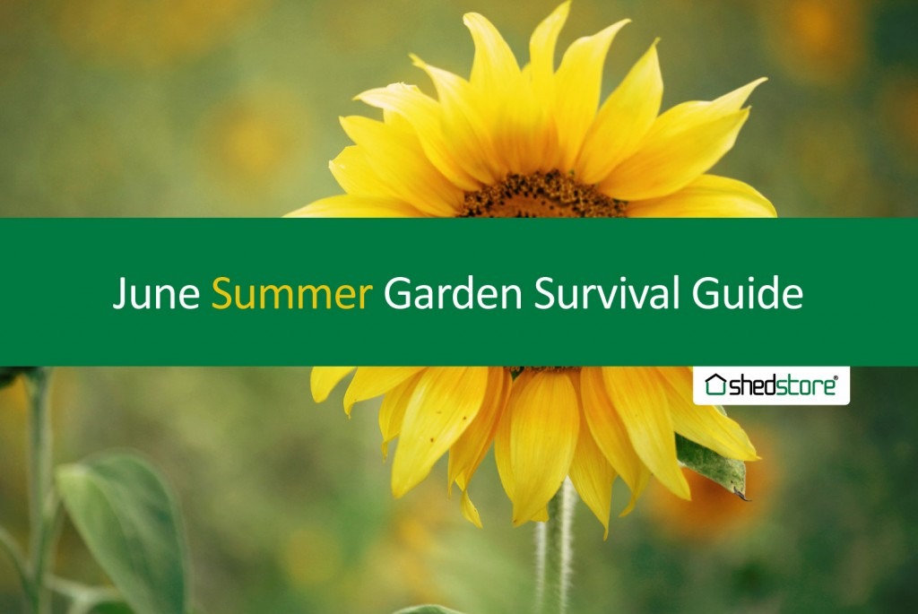 Summer Garden Guide: June Tasks