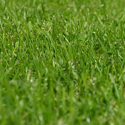 How to Create a No Mow Lawn