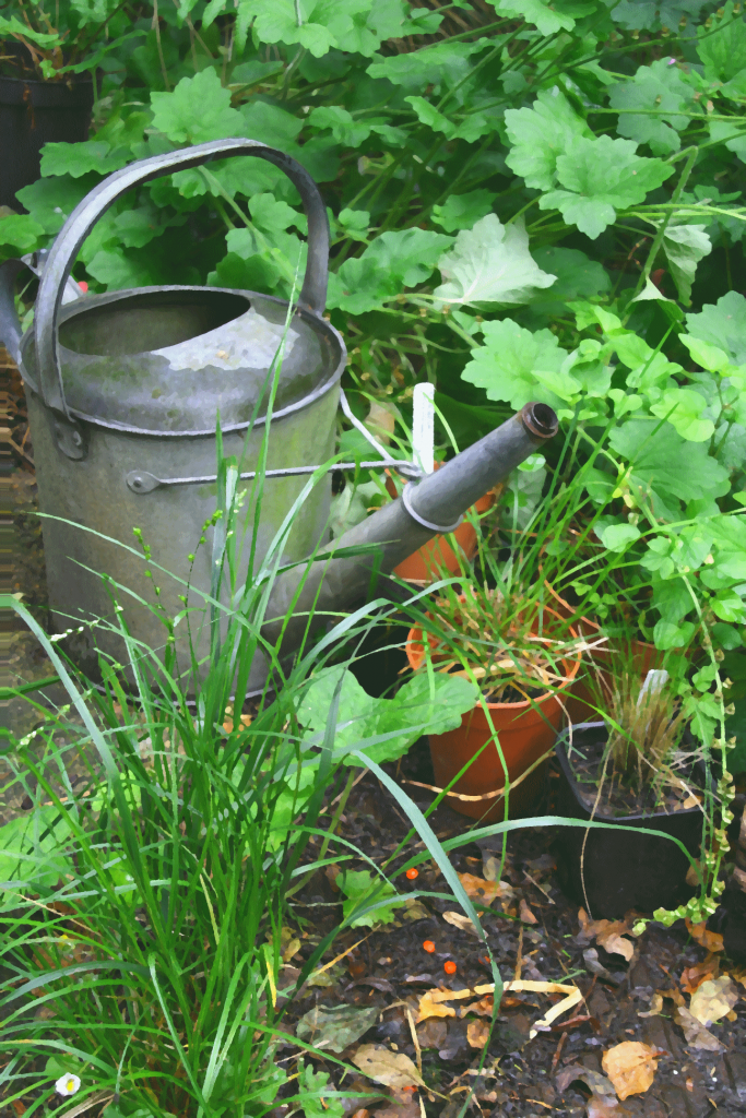5 ways to make your garden even more eco-friendly