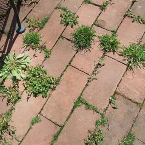 How to Keep Your Patio Weed Free (and Moss Free Too)