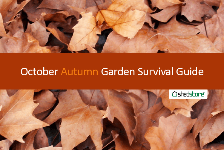 Autumn Garden Guide: October tasks
