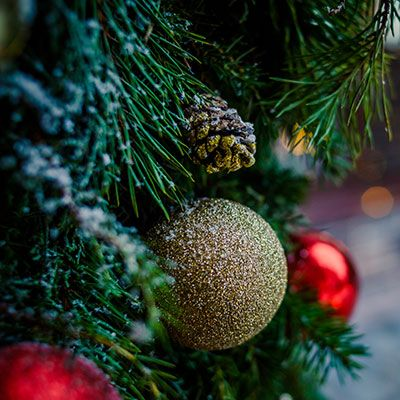 Tips for Recycling a Christmas Tree