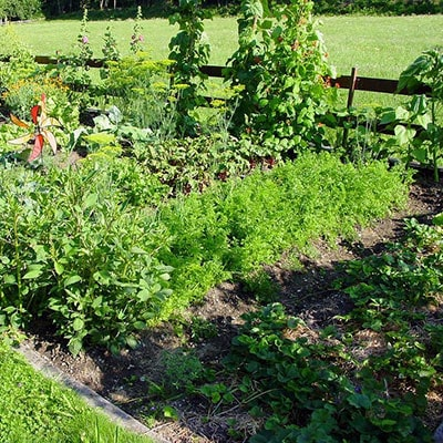 An Interview with The National Allotment Society