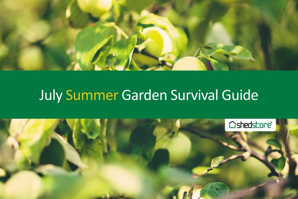 Summer Garden Guide: July Tasks