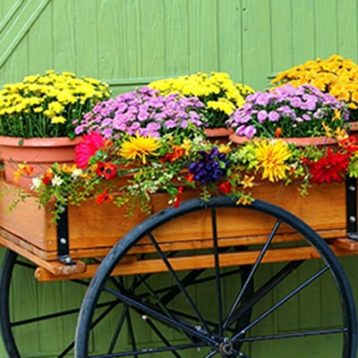 Container Gardening for Autumn