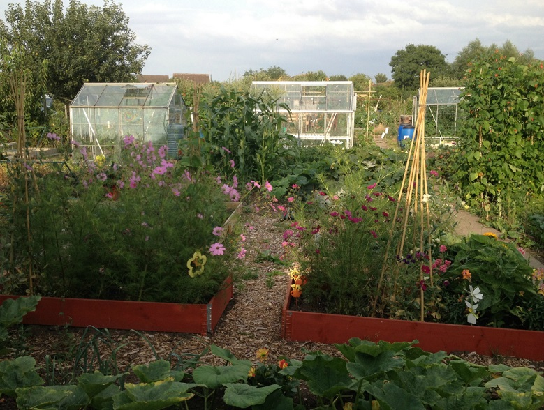 Catherine Hughes' Allotment