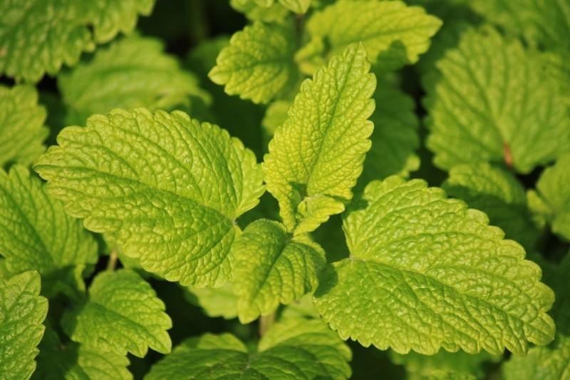 a close up of lemon herbs